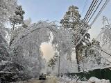 Ледяной дождь в России Snegopad0501